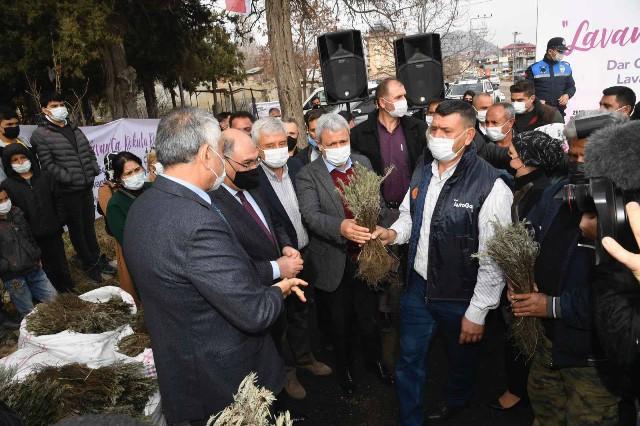 Büyükşehir Pozantı'da 80 bin lavanta fidesi daha dağıttı