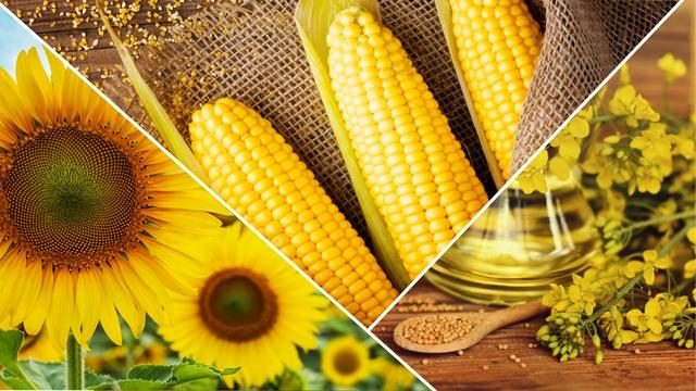 1000 Çiftçi 1000 Bereket programı ile çiftçilerin verimi yüzde 26'ya varan oranda arttı