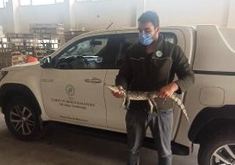 Adana'da çiftlik evinde beslenen timsaha el konuldu