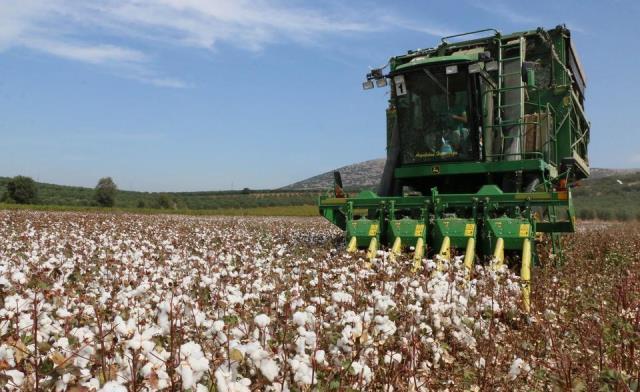 Pamuk hasadında ürün kaybına 427 TL para cezası