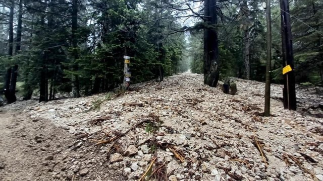 Sel nedeniyle ormanlık alanda mahsur kalan işçiler kurtarıldı