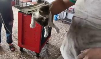 Otomobilin motoruna giren yavru kediyi kurtarmak için seferber oldular
