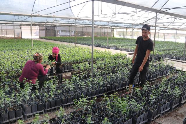 Adana'da yetiştirilen meyve fidanları 14 ülkeye ihraç ediliyor