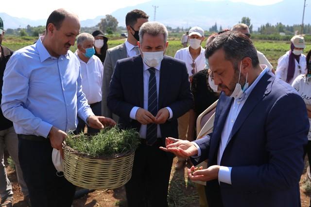 Adana'da tıbbi ve Aromatik bitkilerin hasadı yapıldı