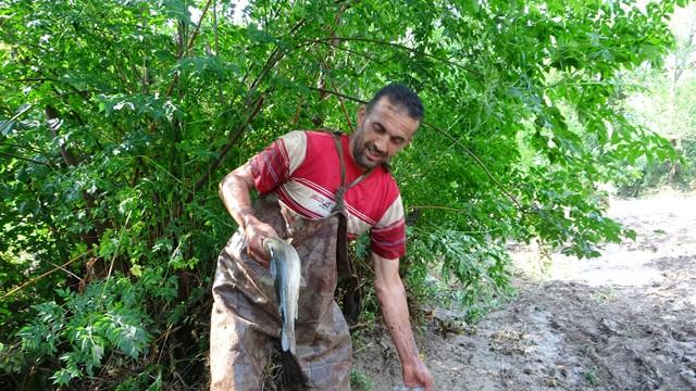 Narenciye bahçesinde balık topladılar