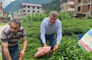 """""""Çay üreticisi özel sektöre ezdiriliyor"""""""