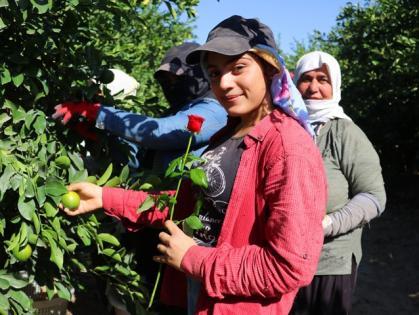 Dünya Kadın Çiftçiler Günü'nde tarlada çalışırken gül alan kadınlar şaşırdı